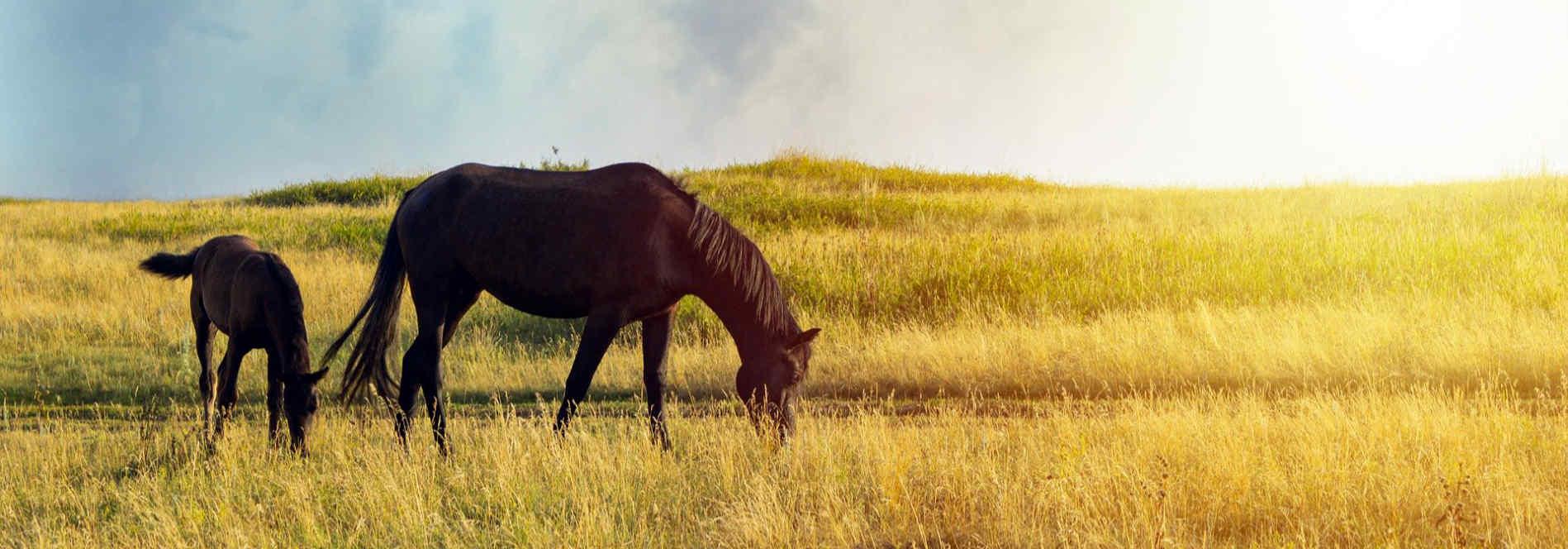 horse-colt-grazing-1.jpg