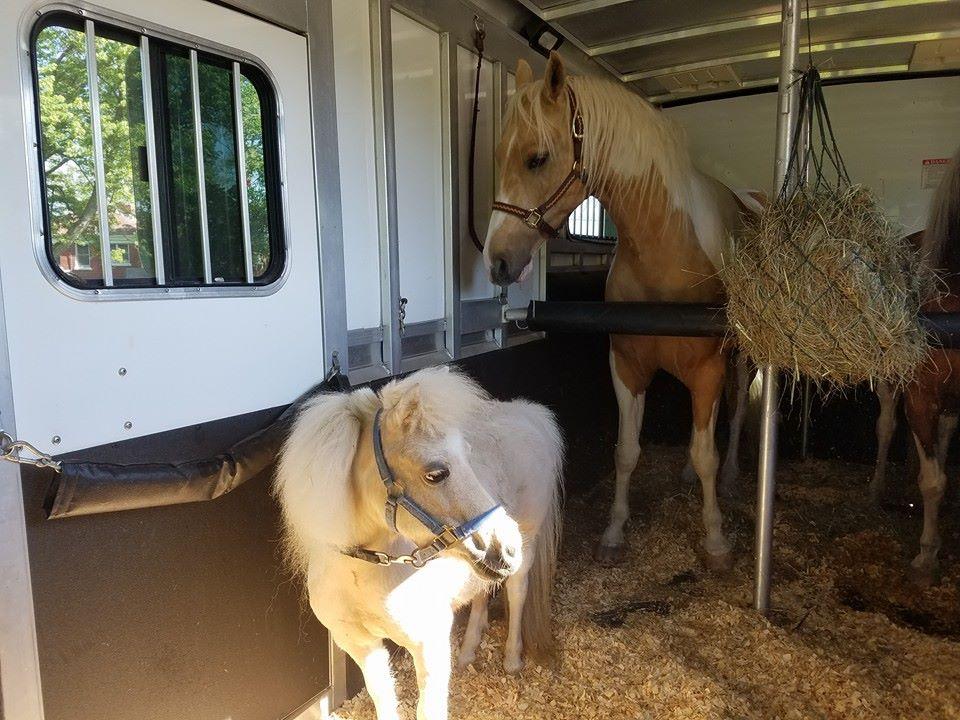 horse-haulers-3.jpg