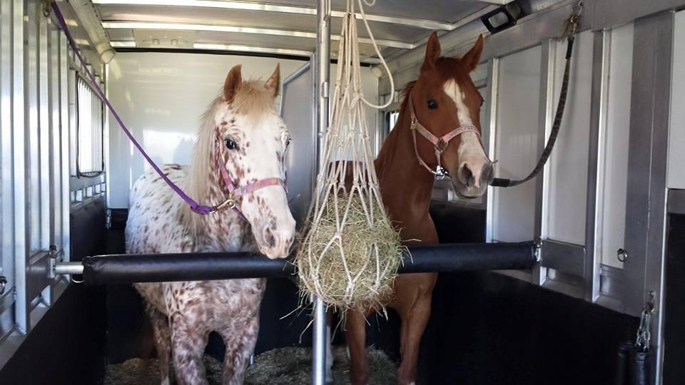 horse-haulers-4.jpg