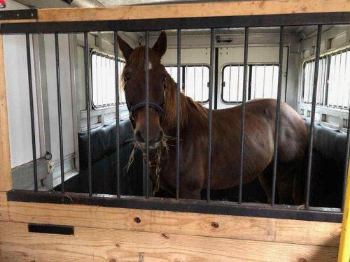horse-hauling-05290.jpg