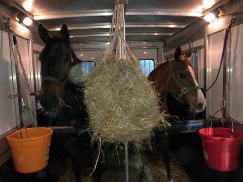 horses-in-transport-0498.jpg